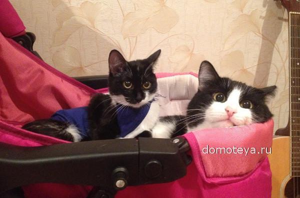 Коты спят в детской коляске
